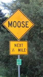 We brake for moose in Eden!